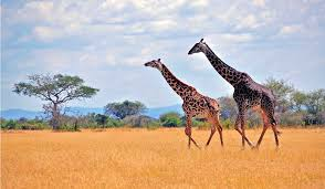 african safari animals survive your first safari with our beginners bush guide u2013 blog