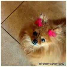 dog barks when we leave how to comfort a barking pomeranian