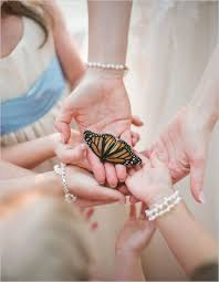 20 best butterflies images on butterfly kisses