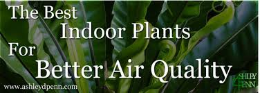 best plants for air quality the best indoor plants for better air quality ashley d penn