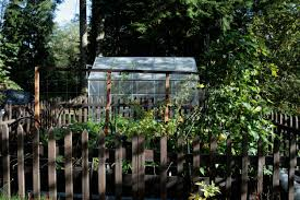 what not to do vegetable gardening tips from real gardeners
