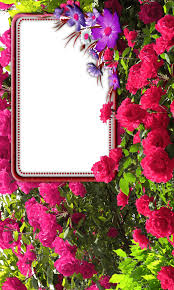 Rose Flower Design Rose Flower Frames Android Apps On Google Play