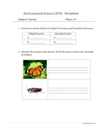 environmental science evs insects worksheet class ii