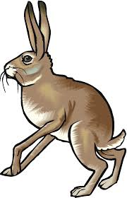 bunny free rabbits clipart free clipart graphics images and photos