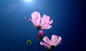 imagenes flores relajantes relaxing music life flowers música relajante flores de la vida