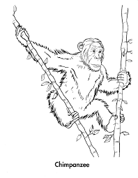 monkey coloring pages 7 monkey coloring pages 8 monkey coloring
