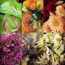 wholesale flowers denver amatos wholesale florist home