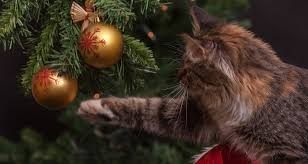 Christmas Cat Memes - christmas cat memes 2017 wishing everyone a meowsy catmas and a