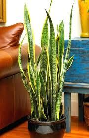 sunlight l for plants best indoor flowering plants flowering house plants no sunlight