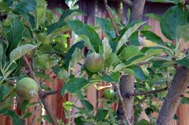 Insecticide For Vegetable Garden by Natural Pest Control For Gardens And Orchards Countryside Network