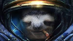 Best Sloth Memes - the best sloth memes home facebook