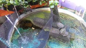how cheap inexpensive aquaponic self sustaining planted turtle