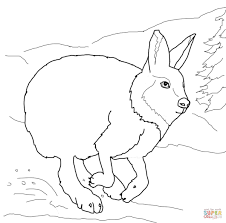running arctic hare coloring page free printable coloring pages