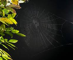 halloween spider web background halloween spider spidersrule