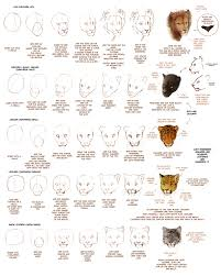 old how to draw big cats part 1 by tamberella on deviantart
