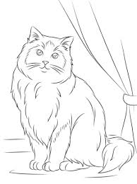 ragdoll cat coloring free printable coloring pages