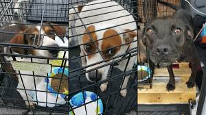 dogs cats saved from harvey battered texas arrive at new jersey
