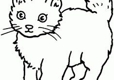 baby zoo animals coloring pages coloring kids