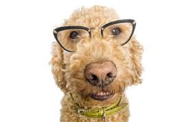Are All Dogs Colour Blind How Can We Know If An Animal Is Color Blind Wonderopolis