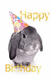 rabbit birthday birthday bunny via giphy bunny bunny