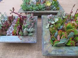 25 best i u0027m dreaming of a succulent christmas images on pinterest