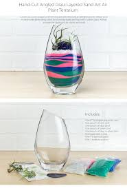layered sand art air plant terrarium currently unavailable