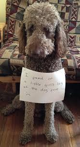Dog Shaming Meme - dog shaming craze is cruel say vets daily mail online