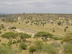 Tropical Savanna Dominant Plants - savanna wikipedia