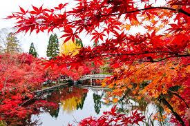 raina u0027s japan travel journal autumn color report kyoto
