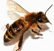 aviva assurances si鑒e social abeille assurances si鑒e social 28 images quimper 200