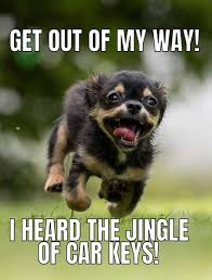 Grumpy Dog Meme - 13 menacing cute dog memes grumpy dog and more barking laughs