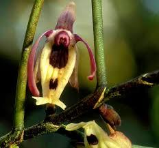 native rainforest plants plants gbsanctuary org