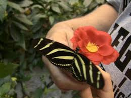 butterfly on finger picture of the butterfly palace branson
