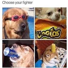 Doge Know Your Meme - corndog for sure doge fighter internet meme know your meme