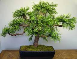 silk bonsai trees topiaies make be leaves
