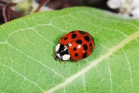 wallpaper ladybug 11 lovely funny and wild animal infowpb com