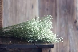 Baby Breath Flowers Aliexpress Com Buy Dried Flowers Baby U0027s Breath Gypsophila Rose