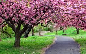 spring blooming trees nature seasons spring spring flowering