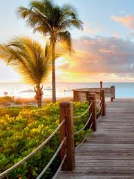 sunset wood dock palm trees android wallpaper free download