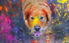 dog look paint wallpaper 2560x1600 12745