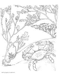 crab on the seabed coloring page