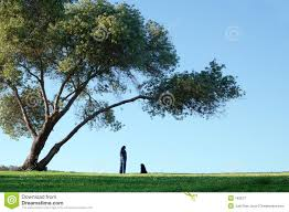 alone the big tree royalty free stock photography image