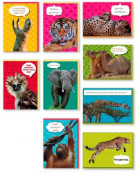 buy assorted 9 pack animal box set all occasion national