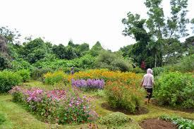 flowers garden city eden nature park davao city mommy queenelizabeth