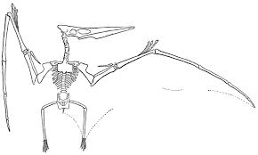 file williston pteranodon jpg wikimedia commons