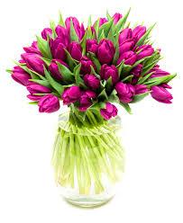 tulips flowers tulips purple