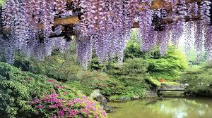 flowers garden pond wisteria hd wallpapers free hd wallpaper