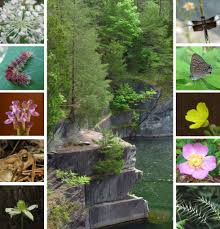 native plants and animals the quarries the quarry gardens