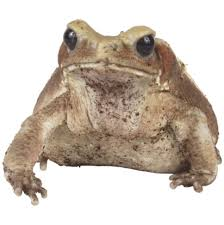 How To Get Rid Of Cane Toads In Backyard How To Keep Frogs U0026 Toads Off My Porch Hunker