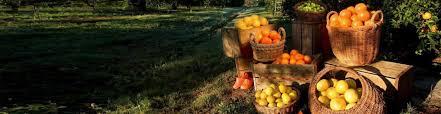 mixon fruit farms bradenton florida fruit shipper